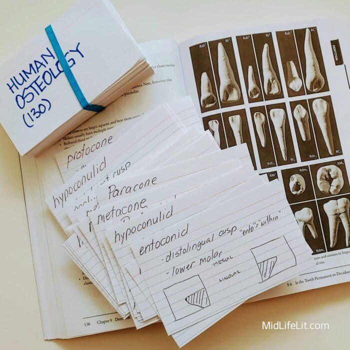 human osteology study materials